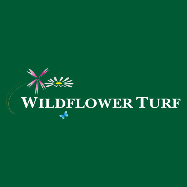 Wildflower Turf WordPress Web Design